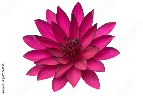 Poster de jardin Nénuphars Lotus flower isolated on white background.