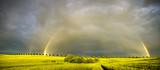 Fototapeta Tęcza - Tęcza nad polem po wiosennej ulewie