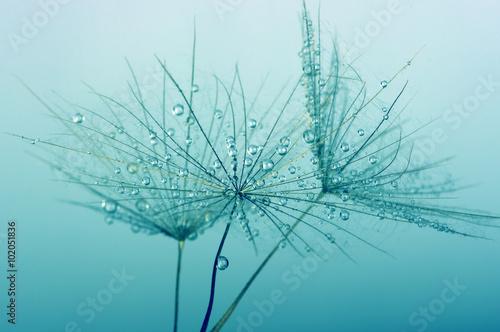Photo sur Aluminium Pissenlits et eau dandelion
