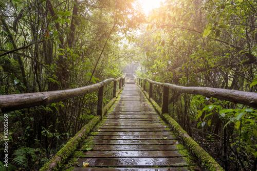 Tuinposter Weg in bos Wooden bridge in tropical rain forest.
