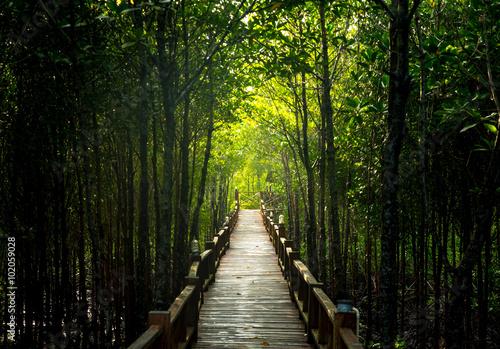 Spoed Foto op Canvas Weg in bos Pathway to mangrove forest.