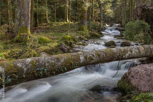 Fototapeten Forest river Ruisseau de montagne