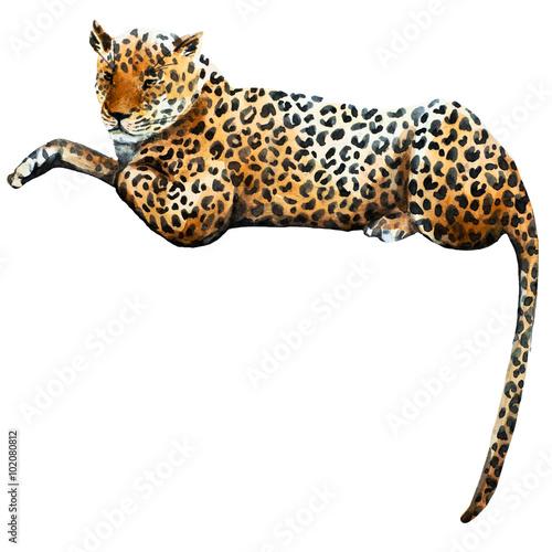 Photo  Watercolor raster leopard