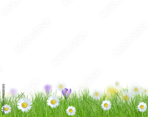 Poster Fleuriste Green grass isolated
