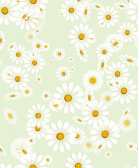 Fototapeta Seamless white chamomile flower texture. Isolated daisy vector floral pattern on green background for wrapping