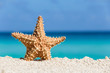 Starfish on caribbean sandy beach