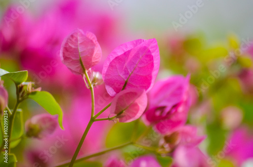 Tuinposter Roze what flowers grow on the beaches of Egypt?