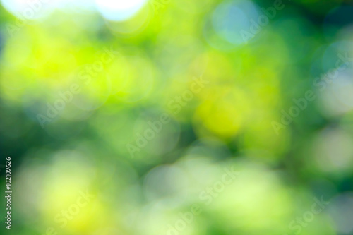 Foto op Plexiglas Groene Sunny abstract green nature background, selective focus.
