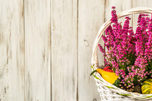 Heather In Basket Isolated On Rustic Wood Background As Autumn H