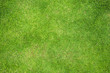 canvas print picture - Grass Field Top View Texture