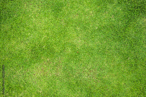 Poster Gras Grass Field Top View Texture