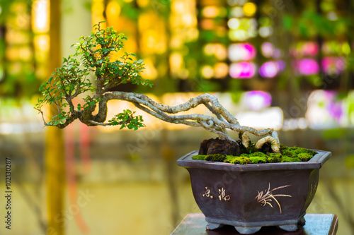 Spoed Fotobehang Bonsai Close up shot bonsai on bokeh background