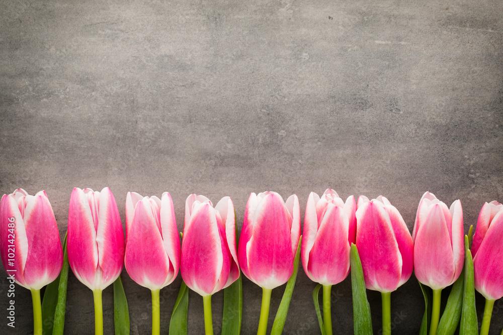 Fototapety, obrazy: Tulips on the grey  background.