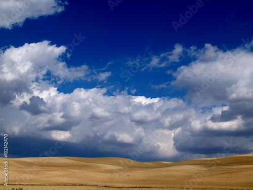 cielos sobre campo de trigo maduro Wallpaper Mural