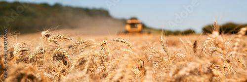 Fotografie, Obraz  Récolte du blé , moissonneuse jaune
