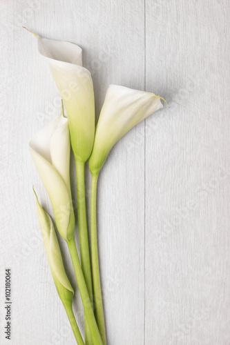 Foto Elegant spring flower, calla lily