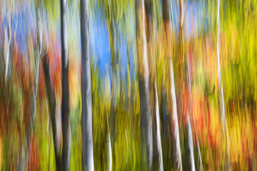 Obraz Fall colors abstract