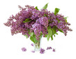 Lilac bunch in vase isolated on white background