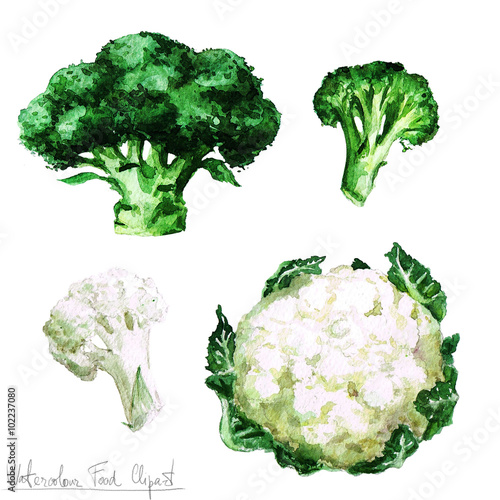 Canvas Prints Watercolor Illustrations Watercolor Food Clipart - Cauliflower and Broccoli