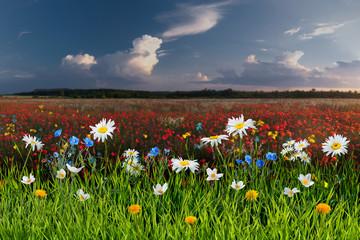 Panel Szklany Podświetlane Do biura Summer landscape with beautiful flowers