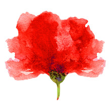 Watercolor Poppy On A White Ba...