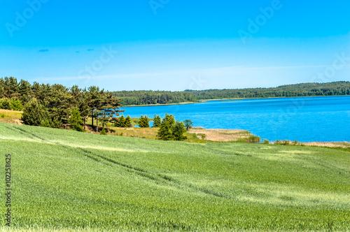 Foto op Aluminium Blauw Landscape of fields of grain by the lake. Dirt road among fields