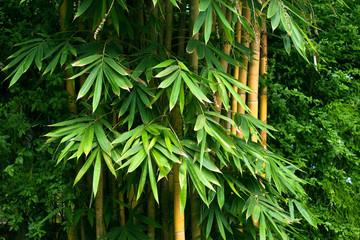Panel Szklany Liście Bamboo