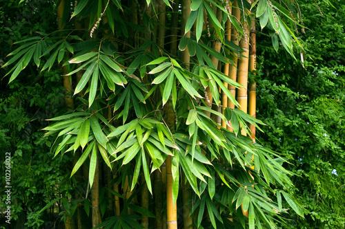 Papiers peints Bambou Bamboo