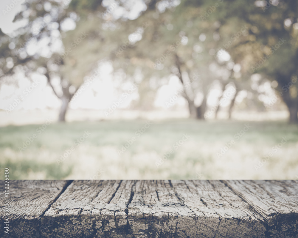 Fototapety, obrazy: Blurred Nature Background with Instagram Style Filter
