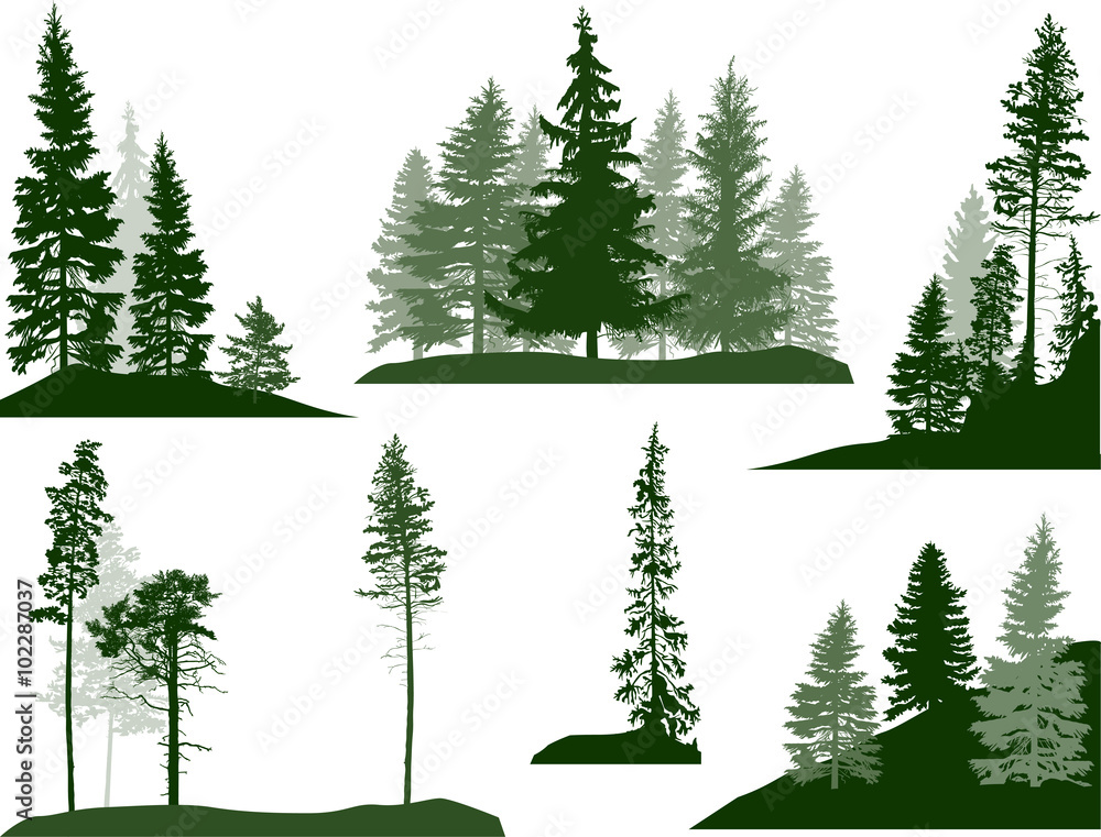 Fototapety, obrazy: set of green pine and fir trees on white
