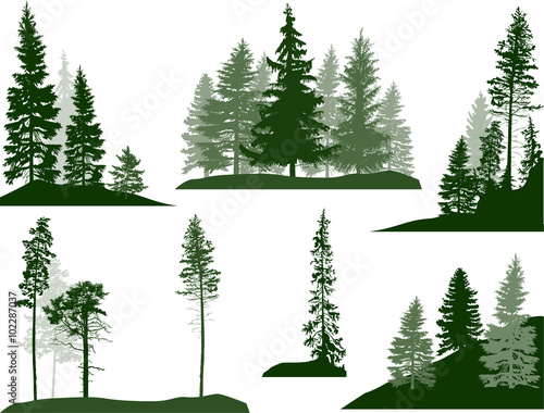 Obraz set of green pine and fir trees on white - fototapety do salonu