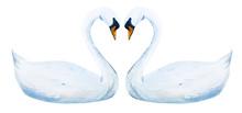 Watercolor Hand Drawn Swans