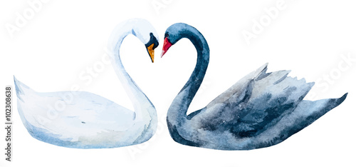 Obraz na plátně Watercolor hand drawn swans