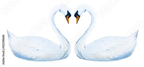 Obraz na płótnie Watercolor hand drawn swans