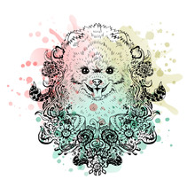 Spitz Graphic Dog, Abstract Ve...