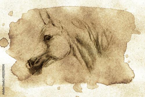 Fényképezés  arabian horse