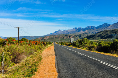 Poster Afrique du Sud Straße zwischen Oudtshoorn und Ladismith mit Aloen am Straßenrand; Garden Route; Südafrika