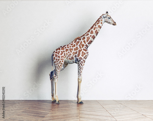 the giraffe baby
