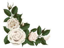 White Roses Buds And Green Leaves. Corner Composition. Element To Decorate Greeting Or Wedding Cards In The Corner Of The Sheet. Vector Flowers Isolated On White Background.