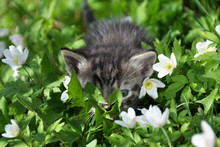 Small Kitten Hiding Behind Leaves