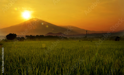 Fotobehang Wit Paddy Fields and Mountain