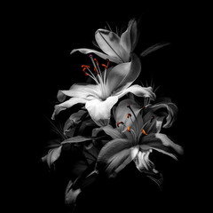 Obraz na Plexi Florystyczny a bouquet of lilies on a black background