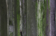 Old Wooden Planks With Green M...