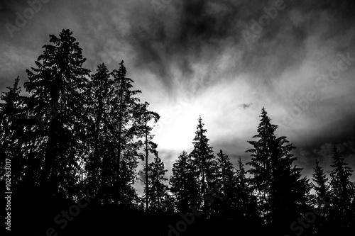 Düstere Bäume und Sonne, schwarz weiß Billede på lærred