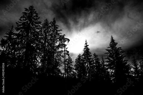 Düstere Bäume und Sonne, schwarz weiß Canvas-taulu