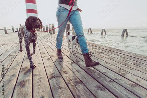 Fotografie, Obraz  Close up image of woman legs during dog walk