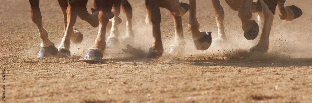 Fototapety, obrazy: Hoof Dust