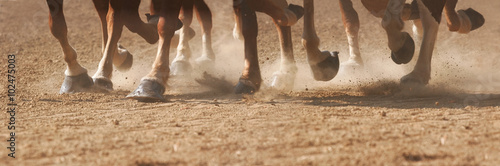 Photo  Hoof Dust