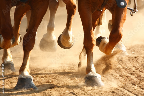 Valokuvatapetti Galloping Horse Hooves