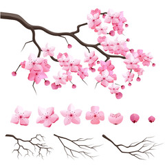 Fototapeta Vector japan sakura cherry branch with blooming flowers. Design constructor with blooming cherry branch